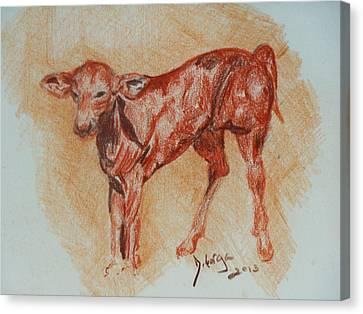 Baby Calf Canvas Print by Deborah Gorga