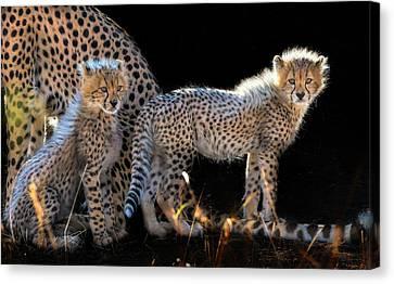 Cheetah Canvas Print - Baby Cheetahs by Jun Zuo