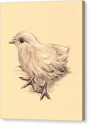 Baby Chicken Canvas Print