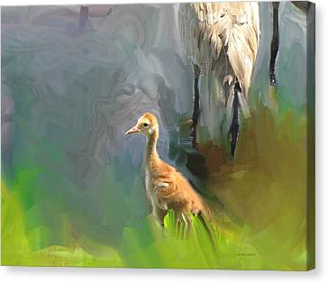 Baby Crane And Mom Canvas Print