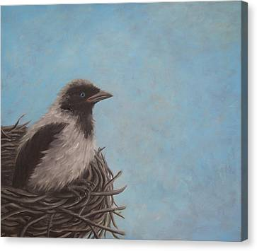 Baby Crow Canvas Print