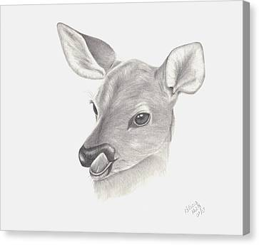 Canvas Print featuring the drawing Baby Deer by Patricia Hiltz