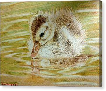 Baby Duck On Pond Canvas Print by Sara DeForge