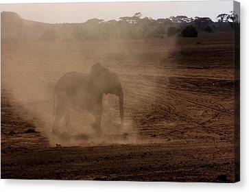 Canvas Print featuring the photograph Baby Elephant  by Amanda Stadther