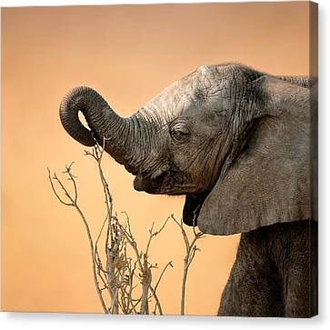 Baby Elephant Reaching For Branch Canvas Print by Johan Swanepoel