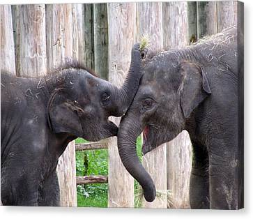 Baby Elephants - Bowie And Belle Canvas Print by Pamela Critchlow