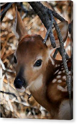 Baby Face Fawn Canvas Print by Athena Mckinzie