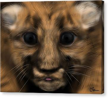 Baby Florida Panther Canvas Print by Christine Fournier