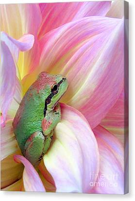 Baby Frog Canvas Print by Irina Hays
