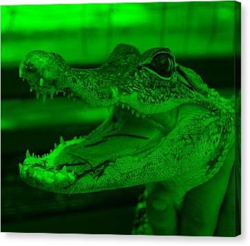 Baby Gator Green Canvas Print by Rob Hans