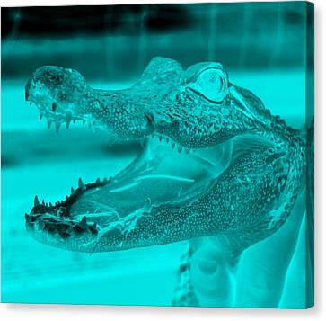 Baby Gator Neg Aquamarine Canvas Print by Rob Hans