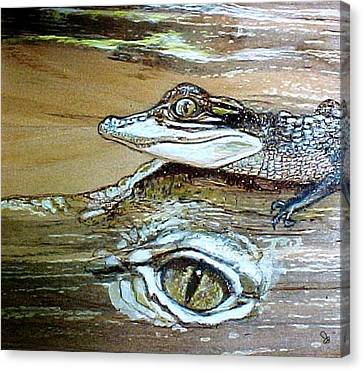Baby Gator On Momma Canvas Print