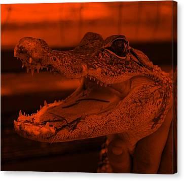 Baby Gator Orange Canvas Print by Rob Hans