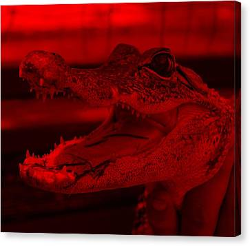 Baby Gator Red Canvas Print by Rob Hans