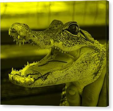 Baby Gator Yellow Canvas Print by Rob Hans