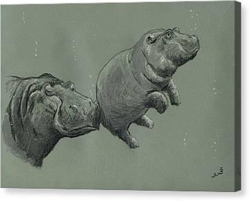 Baby Hippo Canvas Print by Juan  Bosco