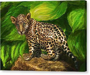 Baby Jaguar Canvas Print by Jane Schnetlage