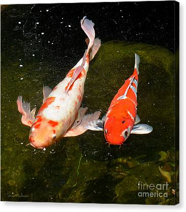 Canvas Print featuring the photograph Baby Koi Makes An Appearance by Susan Wiedmann