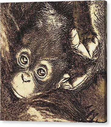 Baby Orangutan Canvas Print by Jane Schnetlage