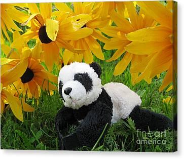 Canvas Print featuring the photograph Baby Panda Under The Golden Sky by Ausra Huntington nee Paulauskaite