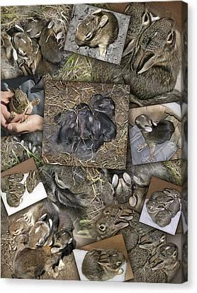 Baby Rabbits Canvas Print by James Larkin