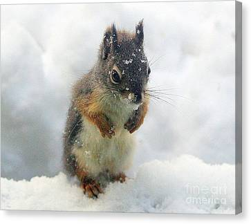 Baby Squirrel Canvas Print by Irina Hays