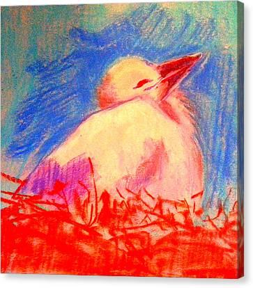 Baby Stork Canvas Print