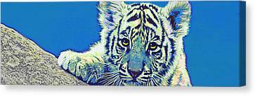 Baby Tiger- Blue Canvas Print by Jane Schnetlage