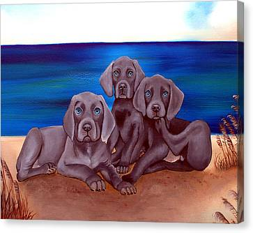 Baby Weims On Beach Canvas Print by Carol Lynn Iyer