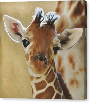 Baby Zara Canvas Print by Jewels Blake Hamrick