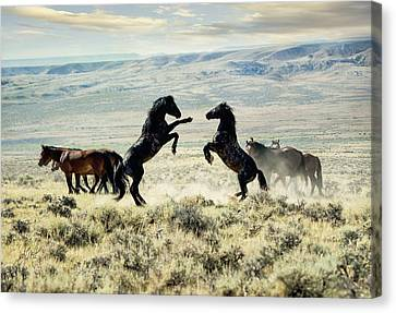 Bachelors Sparring Canvas Print