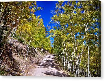 Back Country Road Take Me Home Colorado Canvas Print by James BO  Insogna