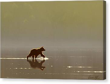 Back Lit Grizzly Canvas Print