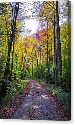 Back Road In The Adirondacks Canvas Print by David Patterson