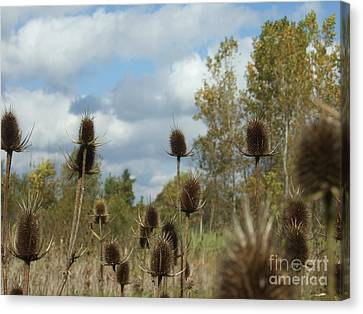 Canvas Print featuring the photograph Back To Nature by Deborah DeLaBarre