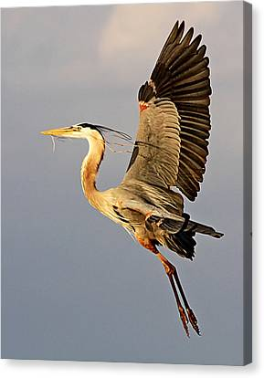 Back To The Nest Canvas Print