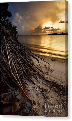 Back To Your Roots Canvas Print by Matt Tilghman
