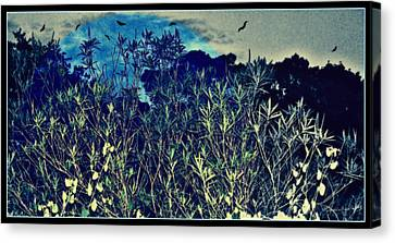 Back Yard Sky Canvas Print by YoMamaBird Rhonda