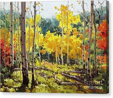 Backlit Aspen Grove  Canvas Print by Gary Kim
