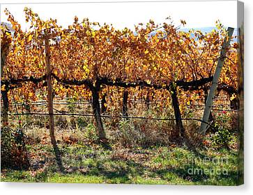 Backlit Autumn Vineyard Canvas Print by Carol Groenen