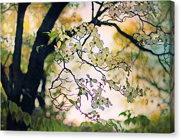 Backlit Blossom Canvas Print by Jessica Jenney
