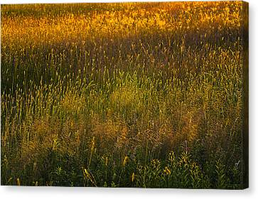 Canvas Print featuring the photograph Backlit Meadow Grasses by Marty Saccone
