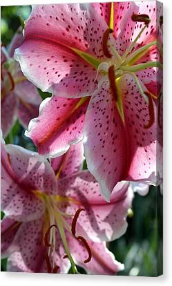Canvas Print featuring the photograph Backlit Spotted Daylilies by Michele Myers