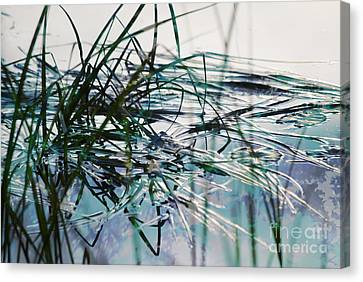 Backwater In Blues Canvas Print by Cynthia Lagoudakis