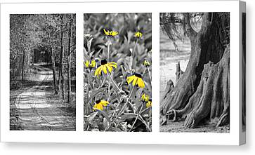 Backwoods Escape Triptych Canvas Print by Carolyn Marshall