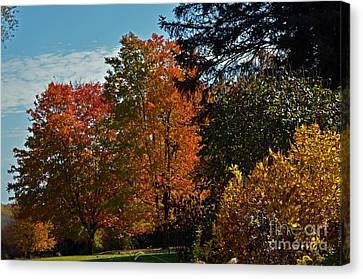 Canvas Print featuring the photograph Backyard Beauty by Judy Wolinsky
