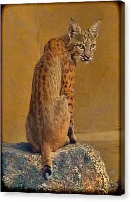 Backyard Bobcat Canvas Print