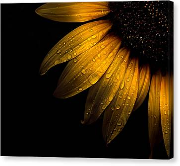 Backyard Flowers 28 Sunflower Canvas Print by Brian Carson