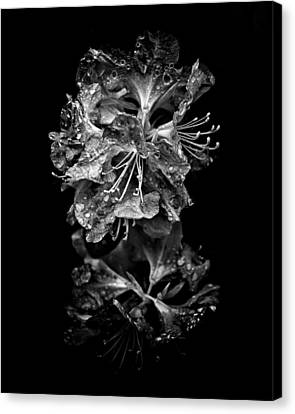 Backyard Flowers In Black And White 1 After The Storm Canvas Print by Brian Carson