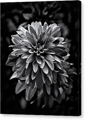 Backyard Flowers In Black And White 15 Canvas Print